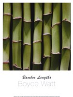 Bamboo Lengths Fine Art Print