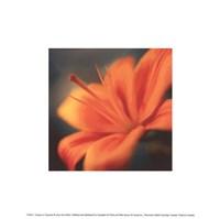 Orange on Turquoise Fine Art Print