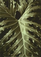 "Tropica I by Boyce Watt - 5"" x 7"""