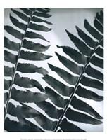 Fern Detail II Fine Art Print