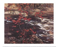 The Red Maple Fine Art Print