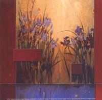 Iris Sunrise Fine Art Print