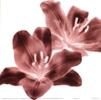 RedLilies Fine Art Print