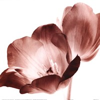 """RedTulips by Dick and Diane Stefanich - 12"""" x 12"""""""