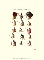 Trout Flies II Fine Art Print