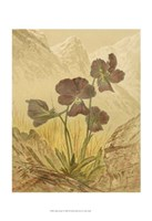 "Alpine Florals I by Vision Studio - 13"" x 19"""