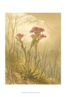 "Alpine Florals II by Vision Studio - 13"" x 19"""