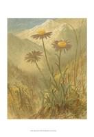 "Alpine Florals III by Vision Studio - 13"" x 19"""