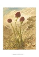 "Alpine Florals IV by Vision Studio - 13"" x 19"""