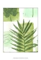 "Leaf Impressions II by Vision Studio - 13"" x 19"", FulcrumGallery.com brand"
