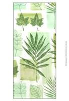 "Leaf Impressions VI by Vision Studio - 13"" x 19"", FulcrumGallery.com brand"