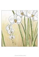 "Sunset Garden II by Chariklia Zarris - 13"" x 19"", FulcrumGallery.com brand"