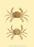 Antique Crab III Fine Art Print