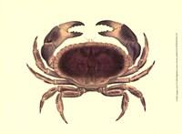 Antique Crab IV Fine Art Print