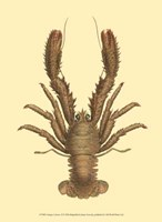 Antique Lobster II Fine Art Print