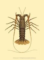 Antique Lobster IV Fine Art Print