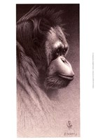 Jo-Jo, the Orangutan Fine Art Print