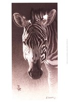 Grant, the Zebra Fine Art Print
