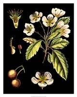 "Black Background Floral Studies I by Vision Studio - 24"" x 30"""