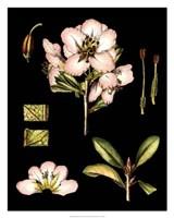 """Black Background Floral Studies II by Vision Studio - 24"""" x 30"""""""
