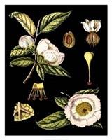 "Black Background Floral Studies III by Vision Studio - 24"" x 30"""