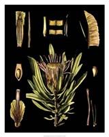 "Black Background Floral Studies IV by Vision Studio - 24"" x 30"""
