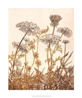 Field of Lace I Giclee