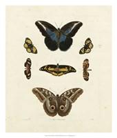 Butterflies I Giclee