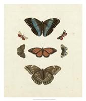 Butterflies IV Framed Print