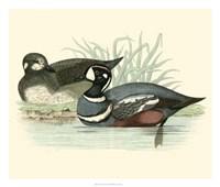 Ducks IV Giclee