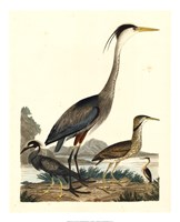 "Heron Family I by Alexander Wilson - 18"" x 22"""