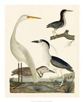 Heron Family II Giclee