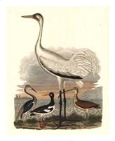 Heron Family III Giclee