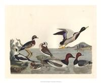 Duck Family II Giclee