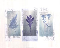 Designer Stamp I Fine Art Print
