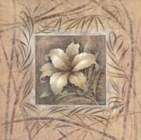 Spa Lily Fine Art Print