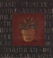 """Sage by Carol Robinson - 9"""" x 9"""""""