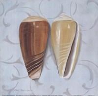 """Cone Shells by Carol Robinson - 9"""" x 9"""""""