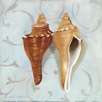 """Melongina Shells by Carol Robinson - 9"""" x 9"""""""