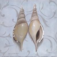 """Tibia Martinie Shells by Carol Robinson - 9"""" x 9"""""""