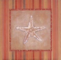 "6"" x 6"" Starfish Pictures"