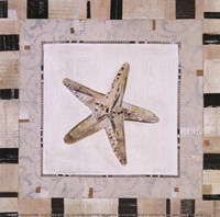 """Shell Simplicity II by Kate and Liz Pope - 6"""" x 6"""""""