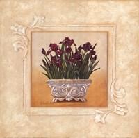 Red Irises Fine Art Print