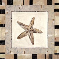 """Shell Simplicity II by Kate and Liz Pope - 12"""" x 12"""""""