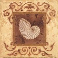 """Stylized Shell III by Jane Carroll - 6"""" x 6"""""""