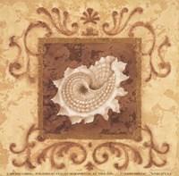 "Stylized Shell IV by Jane Carroll - 6"" x 6"""