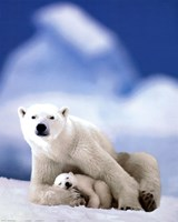 Polar Bear And Baby Fine Art Print