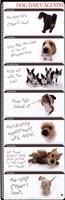 Dog Agenda Fine Art Print