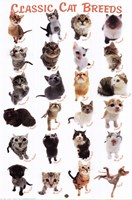 Cat Breeds Fine Art Print