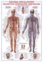 Circulatory System Fine Art Print